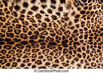 Real Leopard Skin. - Real leopard skin will make for cool...
