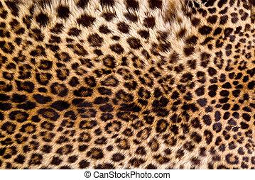 verdadero, piel, Leopardo