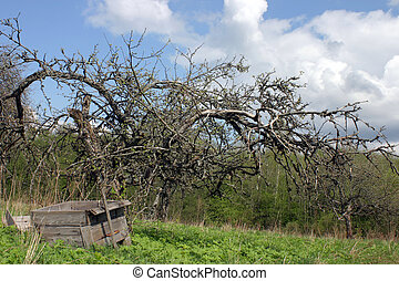 Dead landscape - Spooky dead apple tree and ruined hive