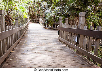 Wooden walkway - Manmade wooden walkway in a tropical forest...