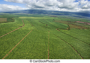 Irrigated cropland. - Aerial of irrigated cropland in Maui,...