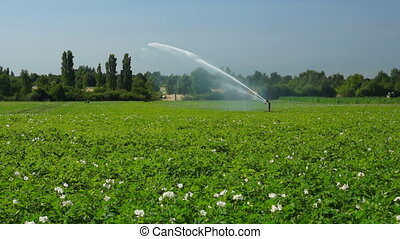 Agricultural sprinkler at work - Common view
