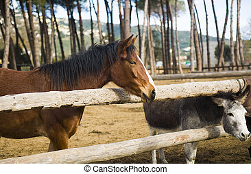 Beautiful horse and donkey