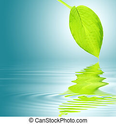 Hosta Leaf Abstract - Hosta leaf with reflection over...