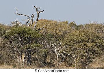 Afrcian bushveld landscape - African bushveld landscape