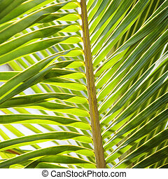 Palm frond - Close up of palm frond