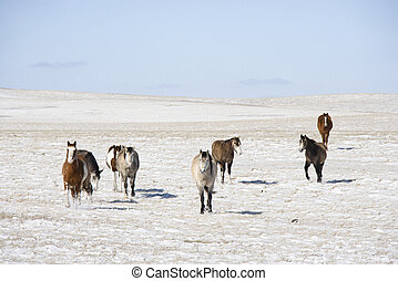 Horses in snow.