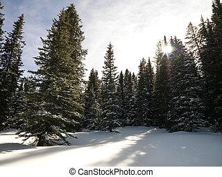 森林, 雪が多い