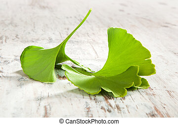 Traditional ginkgo background. - Fresh ginkgo biloba leaves...