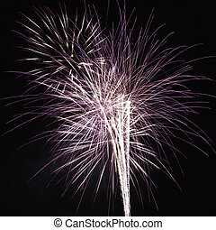Fireworks at night. - Colorful fireworks exploding in night...