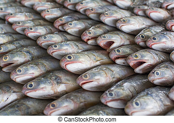Group of fishes ready to Wholesale in fish market of...