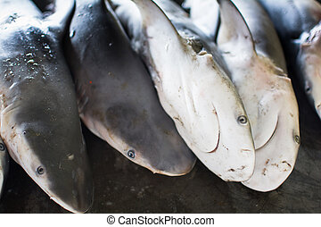 The little sharks for Wholesale on the auction floor of...