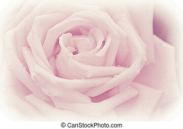 Abstract macro shot of beautiful pink rose flower with water...