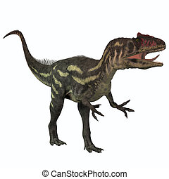 Allosaurus on White - Allosaurus was a large theropod...