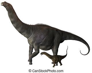 perfil, joven,  argentinosaurus