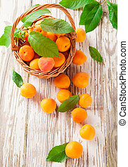 Fresh apricots - Fresh harvested apricots in basket