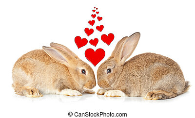 Tow cute rabbits in love on white background