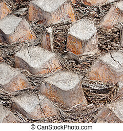 Palm tree bark background texture