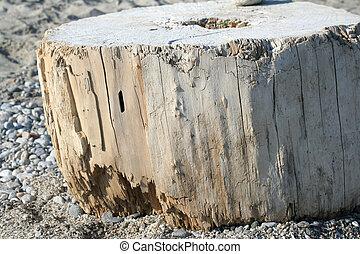 Old marine wood stump