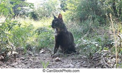 beautiful  European cat