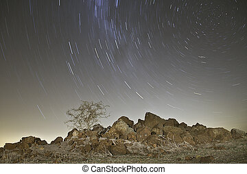 Round rock hill star trail - Star trails behind a dry thorn...