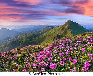 Rosa, Berge,  rhododendron, blumen, Magisches