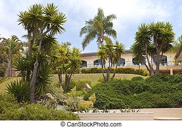Tropical garden in Point Loma California. - Tropical garden...