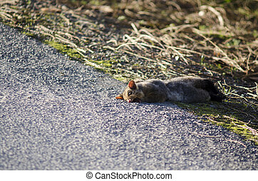Grey Possum - WELLSFORD, NZ - JULY 28:Run over Possum on...