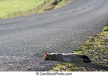 Grey Possum - WILSFORD, NZ - JULY 28:Run over Possum on July...