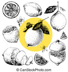 Lemon - Hand drawn illustrations of beautiful yellow lemon...