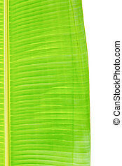 Banana leaves, bright colors can be used to advantage.