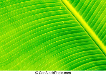Banana leaves, bright colors can be used to advantage
