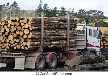 New Zealand Forest Products - KAITAIA,NZ - JULY 30:Logging...