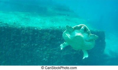 Sea Turtle Under Water - A Sea Turtle Swimming Underwater