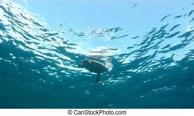 Sea Turtle On Surface