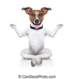 yoga dog sitting relaxed with happy face