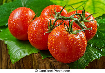 Vine Ripened Tomatos - Vine ripened tomatos against a wet...