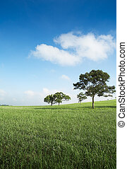 sunny day - trees in an empty field