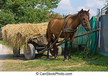 Chestnut mule harnessed to a traditional hay cart Ukraine