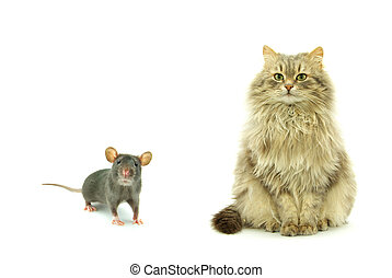 rat and cat - funny rat and cat isolated on white background...