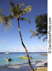 トロピカル, 浜, カリブ海