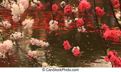 Blossoming Cherry Pond Goldfish - Blossoming cherry with...