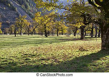 Ahornboden Maple plain valley in the Karwendel mountains in...