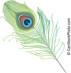 peacock feather vector isolated on white background