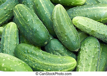 Pile of fresh green cucumbers - Pile of fresh large green...