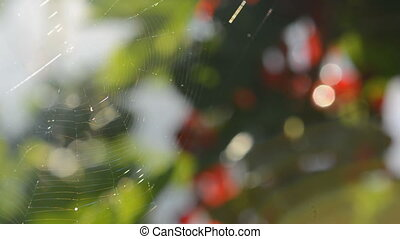 Spiderweb in the wind - The wind blowing to spiderweb.