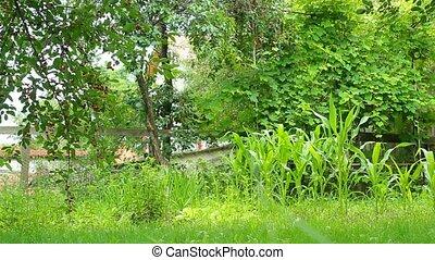 urban garden - Slider shot of urban garden with lush...