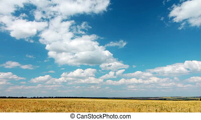 yellow field and cloudy sky