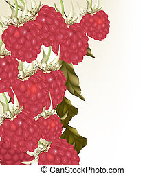 Beautiful vector background with realistic pink raspberry -...