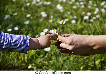 Giving - Female hands giving daisies to a small childs hand...